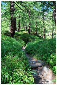 Il sentiero nel bosco / Foto © Emanuele Pagani